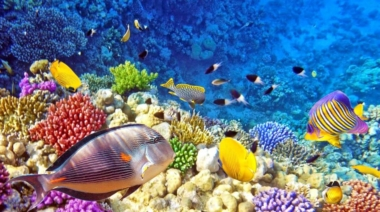 Can Sound Therapy Heal Coral Reefs?